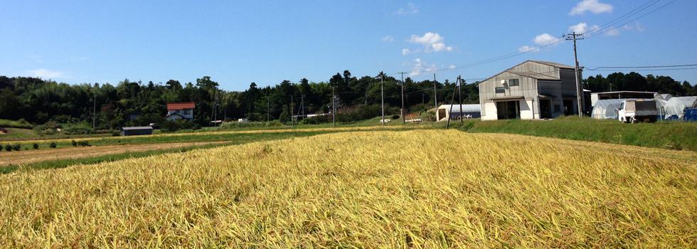 コシヒカリ/つや姫/きぬむすめ/ミルキークィーン/特別栽培米